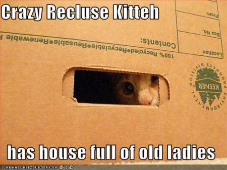 crazy recluse kitteh