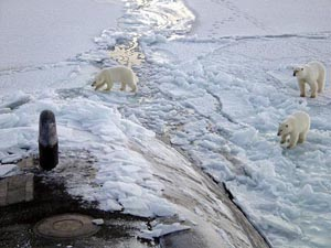 polar bears greet sub