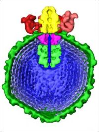 virus model